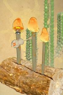 flammulinamexicana