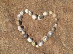 shells heart